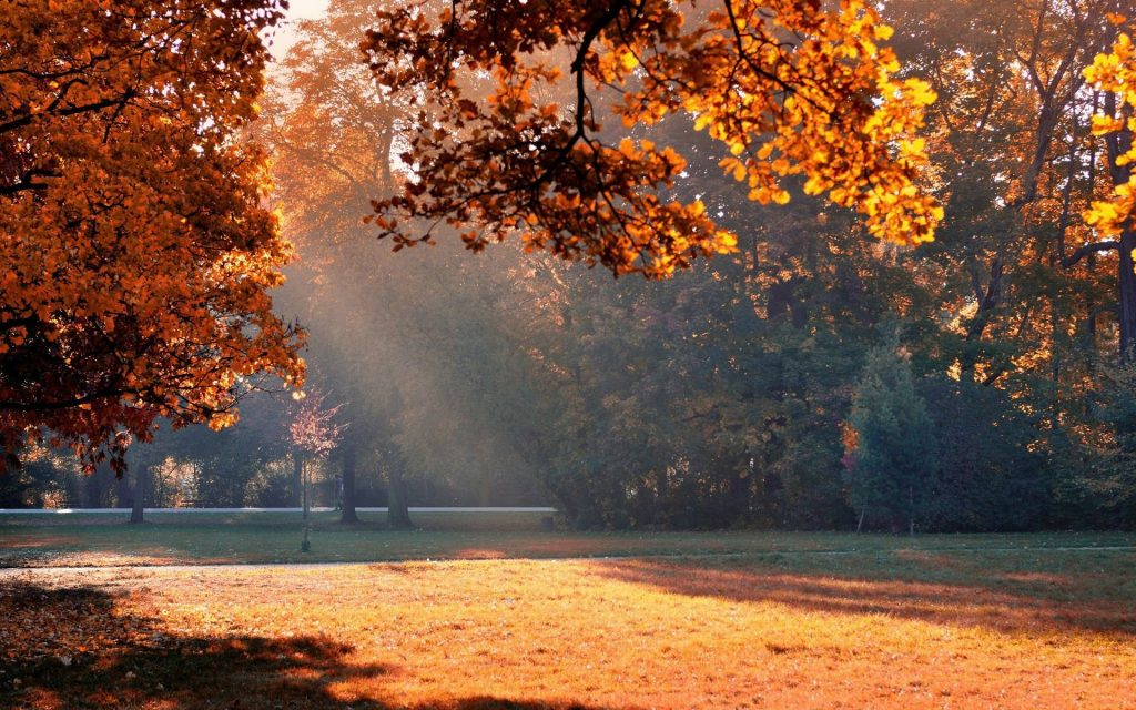 autumn-sunlight-in-the-park-wallpaper